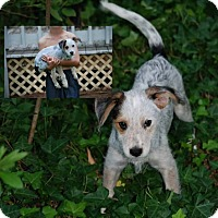 Adopt A Pet :: Bisquit in CT - East Hartford, CT