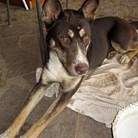 Siberian Husky Mix Dog for adoption in Santa Fe, New Mexico - Roxy