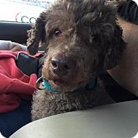 Adopt A Pet :: Cobi - Pittsburgh, PA