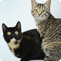 Adopt A Pet :: Autumn & Annabelle - Brooklyn, NY