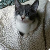 Adopt A Pet :: Debbie - Pembroke Pines, FL