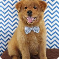 Adopt A Pet :: Cujo - Starkville, MS