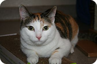 Domestic Shorthair Cat for adoption in Manchester, Connecticut - Hazel and Pippi