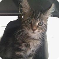 Adopt A Pet :: MADDOX - San Antonio, TX