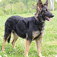 Adopt A Pet :: Greta - Nashua, NH