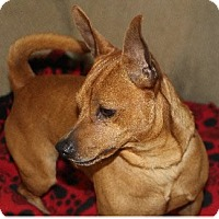 Adopt A Pet :: Bruno - Avon, NY