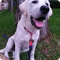 Adopt A Pet :: Jovi - Enfield, CT