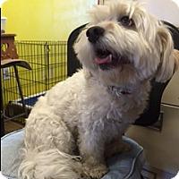 Adopt A Pet :: Stella - Elk Grove, CA