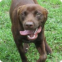 Adopt A Pet :: Bob - Reeds Spring, MO