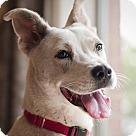 Adopt A Pet :: Boo Girl