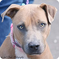 Adopt A Pet :: Honor - Covington, TN
