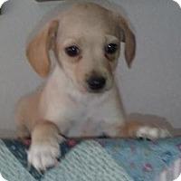 Adopt A Pet :: Max Oliver - Gilbert, AZ