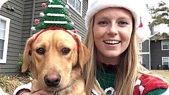 Labrador Retriever Mix Dog for adoption in Chicago, Illinois - Remy