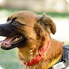 Adopt A Pet :: Janice (Has Application)