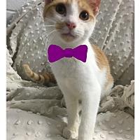 Adopt A Pet :: Chet - Paducah, KY