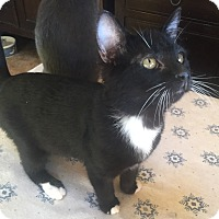 Adopt A Pet :: Tux - Encinitas, CA