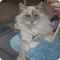 Adopt A Pet :: Shanay - Foothill Ranch, CA