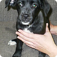 Adopt A Pet :: Aubrey - Eastpoint, FL