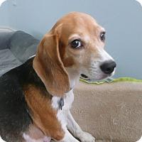 Adopt A Pet :: LILI - Cranston, RI