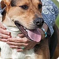 Adopt A Pet :: Frisco - Scotland Neck, NC