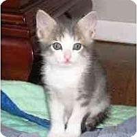 Adopt A Pet :: Marcel - Island Park, NY