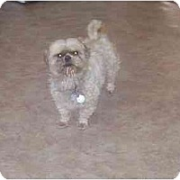 Adopt A Pet :: Kami-Purebred ! - Chandler, IN