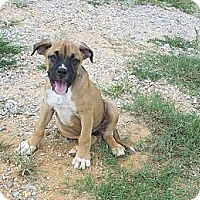 Adopt A Pet :: Bizzy - Adamsville, TN
