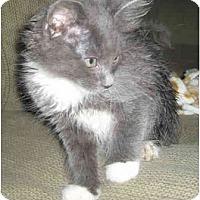 Adopt A Pet :: Anabelle - Davis, CA
