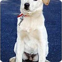 Adopt A Pet :: Gigi - Marina del Rey, CA