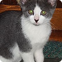 Adopt A Pet :: Macy Gray - N. Billerica, MA