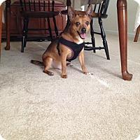 Adopt A Pet :: Dante - Delaware, OH