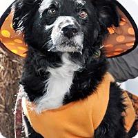 Adopt A Pet :: Ladybug - Georgetown, KY