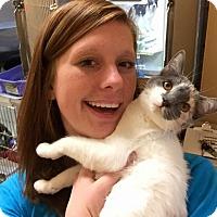 Adopt A Pet :: Jambalaya - McDonough, GA