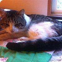 Adopt A Pet :: Tomatoe - Ravenna, TX