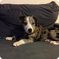 Adopt A Pet :: Jessie - Manhattan, NY