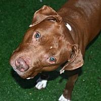 Adopt A Pet :: Romy - Elizabethtown, PA