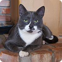 Adopt A Pet :: Dobby - Colorado Springs, CO