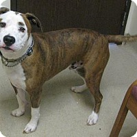 Adopt A Pet :: Attis - Gary, IN