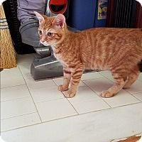 Adopt A Pet :: Neptune - Marietta, GA