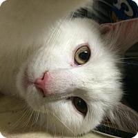 Adopt A Pet :: Leroy - Bensalem, PA