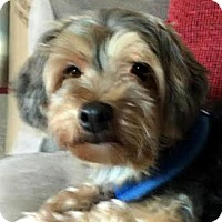 Adopt A Pet :: Jimini Cricket - Sinking Spring, PA