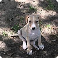 Adopt A Pet :: McPhee - Houston, TX