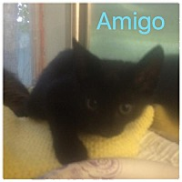 Adopt A Pet :: Amigo - Satellite Beach, FL