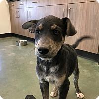 Adopt A Pet :: Butch - Edgewood, NM