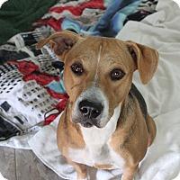 Adopt A Pet :: SOFIA - Wellington, FL