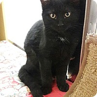 Adopt A Pet :: Chloe - Fullerton, CA