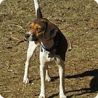 Adopt A Pet :: REESE - South Burlington, VT