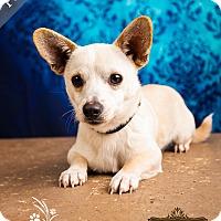 Adopt A Pet :: Polar - Ottawa, KS