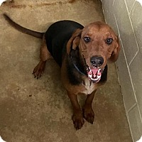 Adopt A Pet :: Ryan - Geneseo, IL