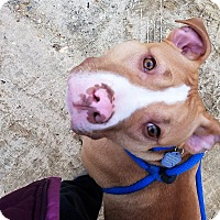 Adopt A Pet :: Brody~foster or adopt - Shrewsbury, NJ